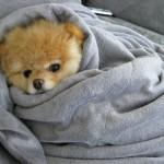 500421 Conheça Boo o cão mais fofo do mundo 25 150x150 Conheça Boo: o cão mais fofo do mundo
