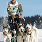 500766 husky siberiano dicas cuidados fotos 23 150x150 Husky Siberiano: dicas, cuidados, fotos