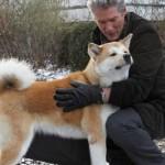 509359 fotos de caes da raca akita 10 150x150 Fotos de cães da raça Akita