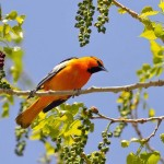 511348 fotos de passaros lindos e coloridos 12 150x150 Fotos de pássaros lindos e coloridos