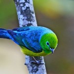 511348 fotos de passaros lindos e coloridos 15 150x150 Fotos de pássaros lindos e coloridos