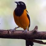 511348 fotos de passaros lindos e coloridos 17 150x150 Fotos de pássaros lindos e coloridos