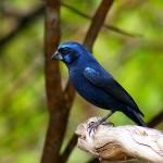 511348 fotos de passaros lindos e coloridos 27 150x150 Fotos de pássaros lindos e coloridos