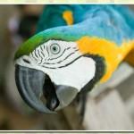 511348 fotos de passaros lindos e coloridos 3 150x150 Fotos de pássaros lindos e coloridos