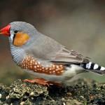 511348 fotos de passaros lindos e coloridos 31 150x150 Fotos de pássaros lindos e coloridos