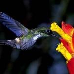 511348 fotos de passaros lindos e coloridos 32 150x150 Fotos de pássaros lindos e coloridos