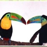 511348 fotos de passaros lindos e coloridos 4 150x150 Fotos de pássaros lindos e coloridos