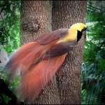 511348 fotos de passaros lindos e coloridos 9 150x150 Fotos de pássaros lindos e coloridos