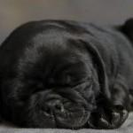 514378 animais fofos dormindo fotos 15 150x150 Fotos de animais fofos dormindo