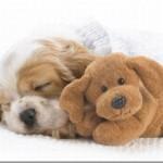 514378 animais fofos dormindo fotos 150x150 Fotos de animais fofos dormindo