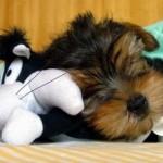 514378 animais fofos dormindo fotos 17 150x150 Fotos de animais fofos dormindo