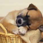 514378 animais fofos dormindo fotos 18 150x150 Fotos de animais fofos dormindo