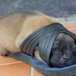 514378 animais fofos dormindo fotos 19 150x150 Fotos de animais fofos dormindo
