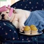 514378 animais fofos dormindo fotos 21 150x150 Fotos de animais fofos dormindo