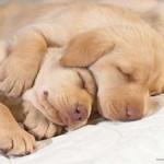 514378 animais fofos dormindo fotos 22 150x150 Fotos de animais fofos dormindo