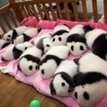 514378 animais fofos dormindo fotos 24 150x150 Fotos de animais fofos dormindo