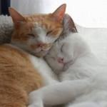 514378 animais fofos dormindo fotos 27 150x150 Fotos de animais fofos dormindo