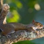 514378 animais fofos dormindo fotos 30 150x150 Fotos de animais fofos dormindo