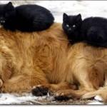 514378 animais fofos dormindo fotos 31 150x150 Fotos de animais fofos dormindo