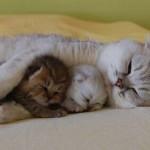 514378 animais fofos dormindo fotos 35 150x150 Fotos de animais fofos dormindo