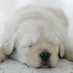 514378 animais fofos dormindo fotos 36 150x150 Fotos de animais fofos dormindo