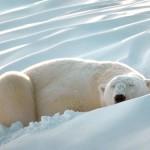 514378 animais fofos dormindo fotos 37 150x150 Fotos de animais fofos dormindo