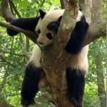 514378 animais fofos dormindo fotos 4 150x150 Fotos de animais fofos dormindo