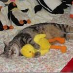514378 animais fofos dormindo fotos 8 150x150 Fotos de animais fofos dormindo