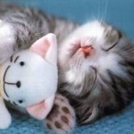 514378 animais fofos dormindo fotos 9 150x150 Fotos de animais fofos dormindo
