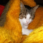 514445 fotos de gatos dormindo 13 150x150 Fotos de gatos dormindo