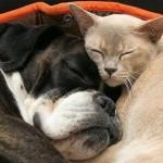 514445 fotos de gatos dormindo 15 150x150 Fotos de gatos dormindo