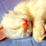 514445 fotos de gatos dormindo 17 150x150 Fotos de gatos dormindo