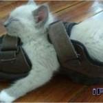 514445 fotos de gatos dormindo 18 150x150 Fotos de gatos dormindo