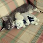 514445 fotos de gatos dormindo 19 150x150 Fotos de gatos dormindo