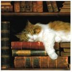 514445 fotos de gatos dormindo 26 150x150 Fotos de gatos dormindo
