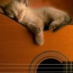 514445 fotos de gatos dormindo 32 150x150 Fotos de gatos dormindo