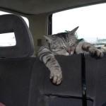 514445 fotos de gatos dormindo 33 150x150 Fotos de gatos dormindo