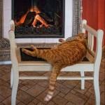 514445 fotos de gatos dormindo 36 150x150 Fotos de gatos dormindo