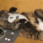 514445 fotos de gatos dormindo 38 150x150 Fotos de gatos dormindo