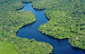 Fotos da Floresta Amazônica