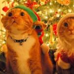 549119 capas comemorativas de natal para facebook 5 150x150 Capas comemorativas de Natal para Facebook