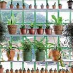 585627 Escolha os modelos que mais lhe agrada de decoração. Foto divulgação 150x150 Sugestões de plantas para cultivar na sacada