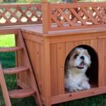 606177 Casinhas de cachorro diferentes fotos 4 150x150 Casinhas de cachorro diferentes: fotos