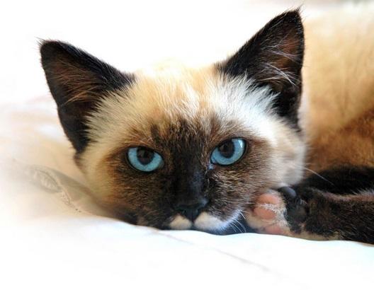 Medicina de vermes de gatinhos 1 mês