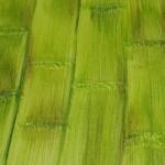 654370 Diferentes texturas para paredes fotos 9 150x150 Diferentes texturas para paredes: fotos