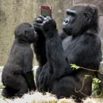 666308 animais fazendo pose de humanos fotos 10 150x150 Animais fazendo pose de humanos: fotos
