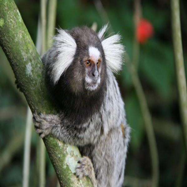 Favoritos Fotos de animais exóticos - MundodasTribos – Todas as tribos em um  EI08