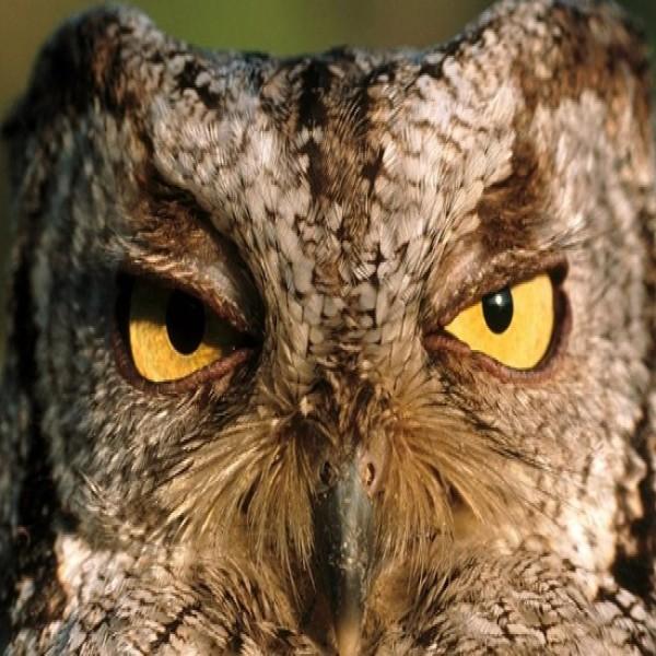 Fotos de animais ex ticos for Imagenes de jardines exoticos