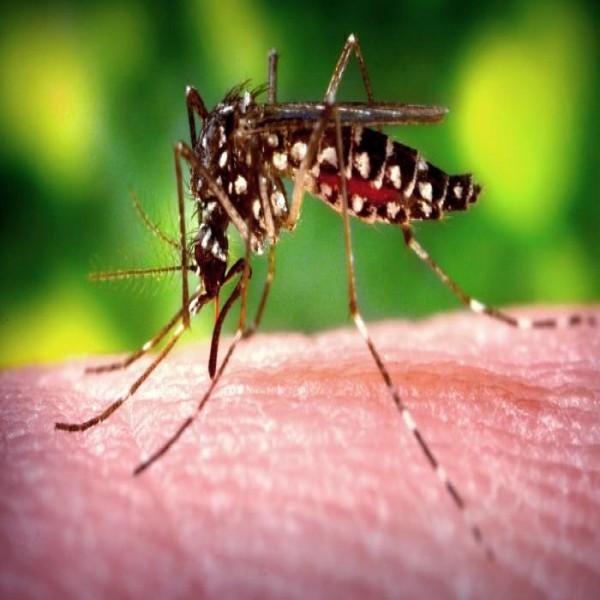 Dicas Para Evitar O Mosquito Da Dengue Em Casa - Evitar Mosquitos En ...