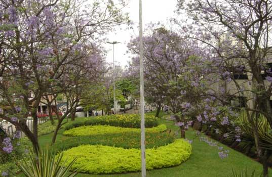 fotos de jardim externo:Decoração de Jardim Externo